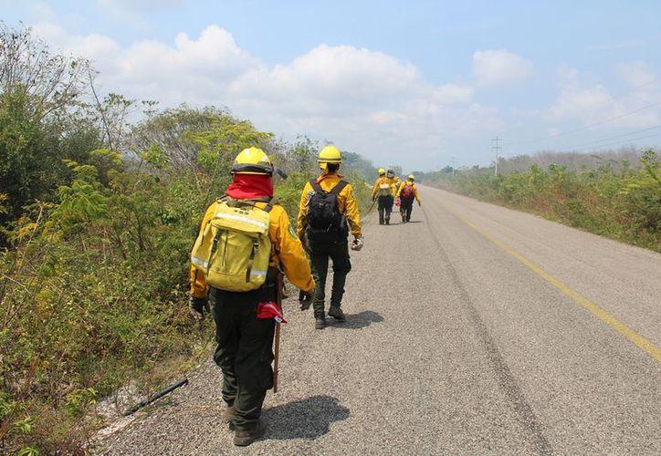 Más de dos mil hectáreas resultaron siniestradas en el municipio bacalarense. (Joel Zamora/SIPSE)