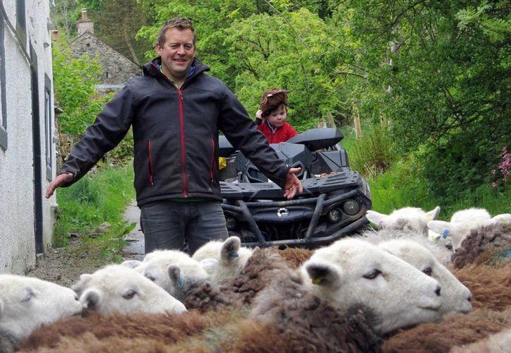 El pastor James Rebanks arrea a sus ovejas mientras su hijo Isaac está sobre una cuatrimoto en Matterdale, Inglaterra. Rebanks es el pastor ovejero más famoso del mundo, con una exitosa cuenta en Twitter, un libro best-seller y televisoras haciendo fila en su granja. (Foto AP/Jill Lawless)
