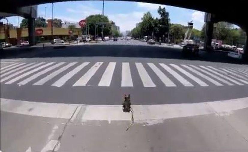 El ciclista alcanzó a la mascota a la altura de la calle Rembrandt. (Foto: Twitter)