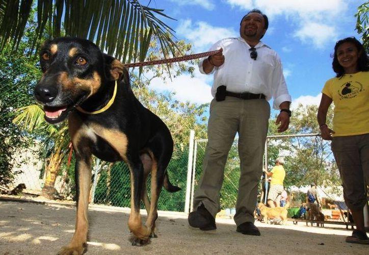 'Matar a los perros y gatos no es la solución', considera el diputado Francisco Torres Rivas. (SIPSE)