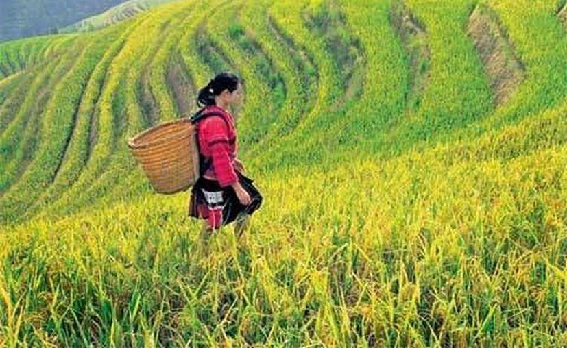 Más de 5,000 prisioneras son obligados a trabajar en condiciones infrahumanas en los campos de China. (pcpagrana.wordpress.com)