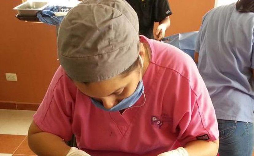 Se espera esterilizar a 350 perros y gatos, 70% de ellos hembras. (Milenio Novedades)