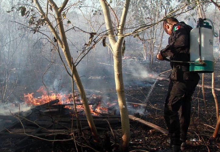 Con el calor, el número e intensidad de incendios forestales va en aumento. (Milenio Novedades)