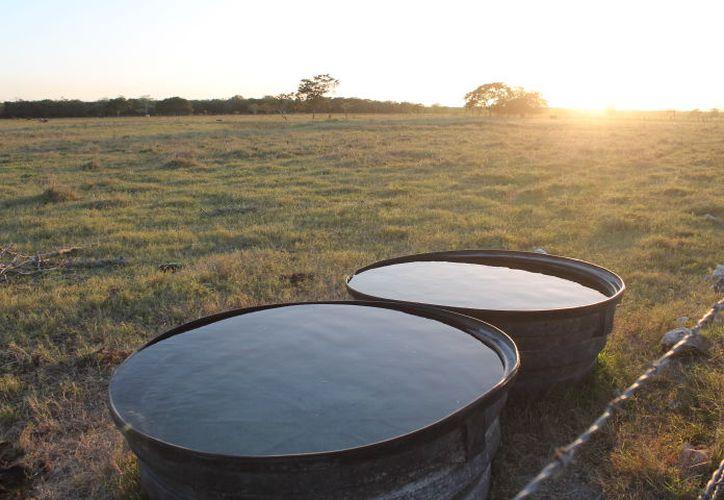 Con las superficies para el ganado vacías, los productores esperan $33 millones que la Sagarpa prometió. (Joel Zamora/SIPSE)