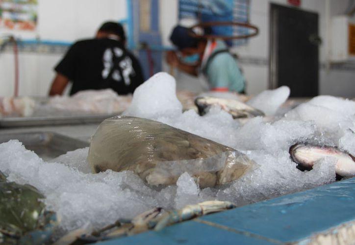 Temen que el producto contaminado haya llegado al sureste por las exportaciones. (Foto: David de la Fuente)