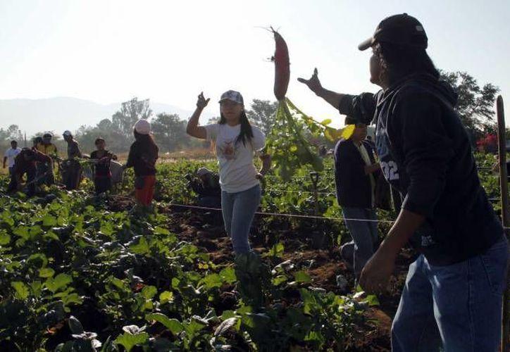 La Cruzada contra el hambre beneficiará, entre otros, a pequeños productores. (Notimex/Archivo)