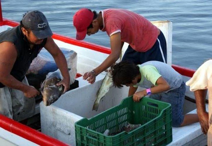 La Sagarpa prevé reforzar la vigilancia a las embarcaciones pesqueras dedicadas a la captura de mero. (Archivo/SIPSE)