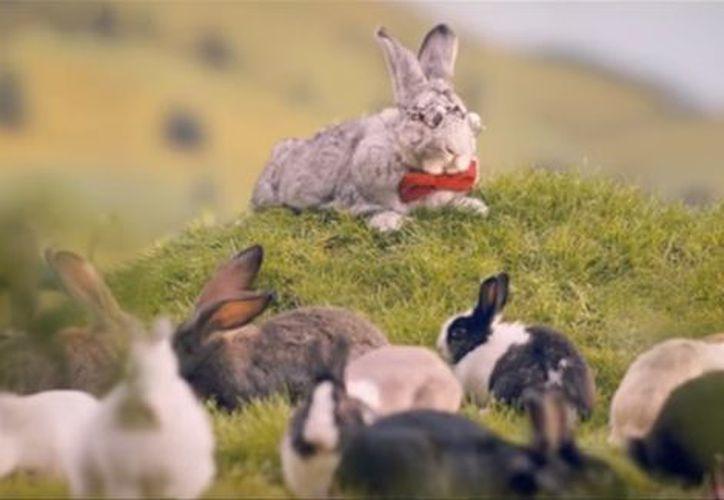 Con video de conejos planean reverter el decrecimiento de su población. (Milenio)