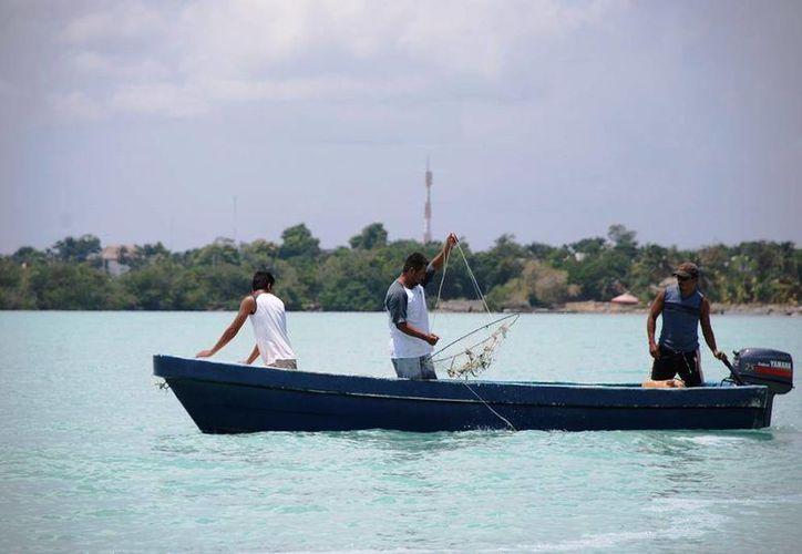 El recurso de el mero es una pesquería de escama marina de mayor importancia en la península de Yucatán. (Edgardo Rodríguez/SIPSE)