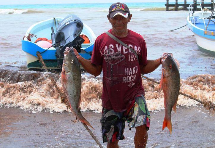 Al menos el 20% de lo capturado se queda para los comerciantes locales. (Foto: Octavio Martínez/SIPSE)