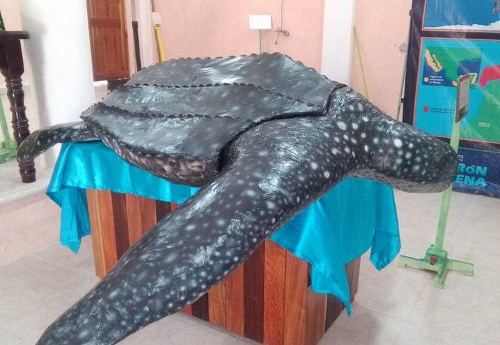 Además de la réplica de una tortuga  laúd, los turistas podrán conocer más especies de la fauna silvestre y marina. (Rossy López/SIPSE)