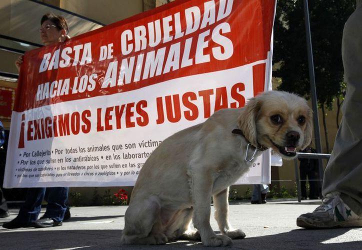 Los activistas que acudieron a la manifestación explicaron que los animales acusados deben ser entregados a sociedades protectoras. (Notimex)