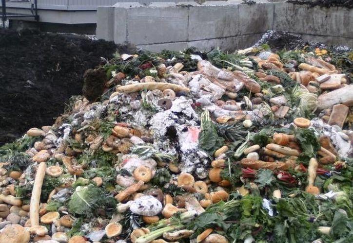 En el mundo se desperdician mil 300 millones de toneladas de alimentos al año, de acuerdo a un estudio del Instituto Sueco de Alimentos y Biotecnología. (SIPSE/Foto de contexto)