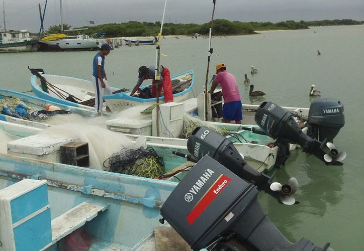 Pescadores de Progreso se arriesgan a pescar el pargo de variedad denominada canané. (SIPSE)