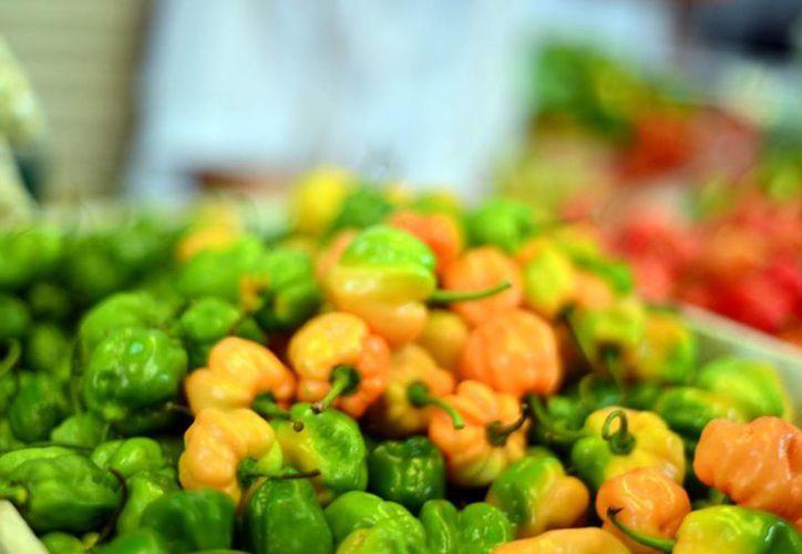 """La variedad de habanero """"Mayan Kisín"""" es más picante. (Milenio Novedades)"""