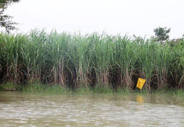 Estiman que deberán pasar cerca de tres meses para que los niveles del agua bajen. (Edgardo Rodríguez/SIPSE)