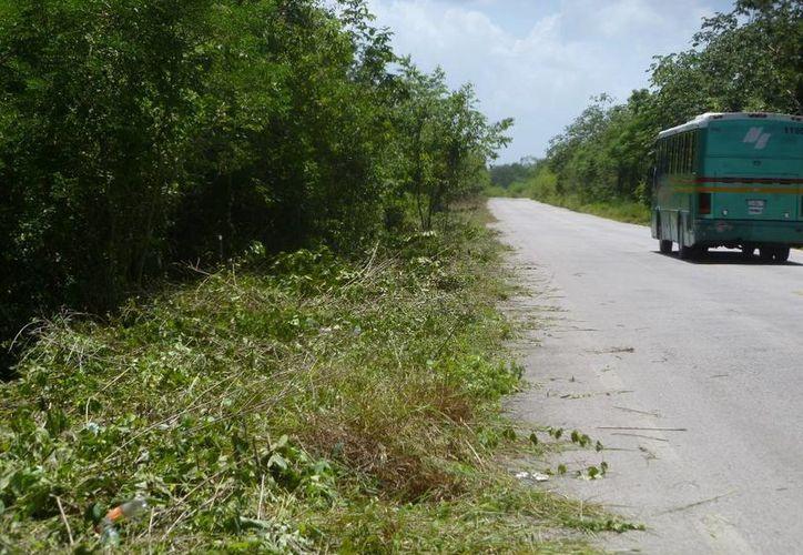 Los trabajos de mantenimiento de las orillas de las carreteras emplean temporalmente a 70 ejidatarios.  (Raúl Balam/SIPSE)