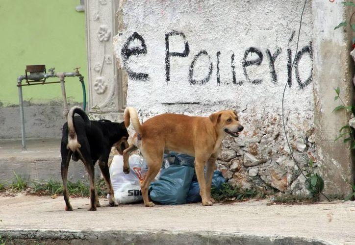 Los análisis de laboratorio que se mandaron a realizar al perro dieron positivo al caso de rabia, no hubo más casos. (Milenio Novedades)