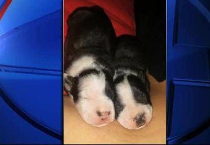 La policía de Lovington, Nuevo México, informó que es la tercera vez que se registra ataque a perros con ácido. (kob.com)