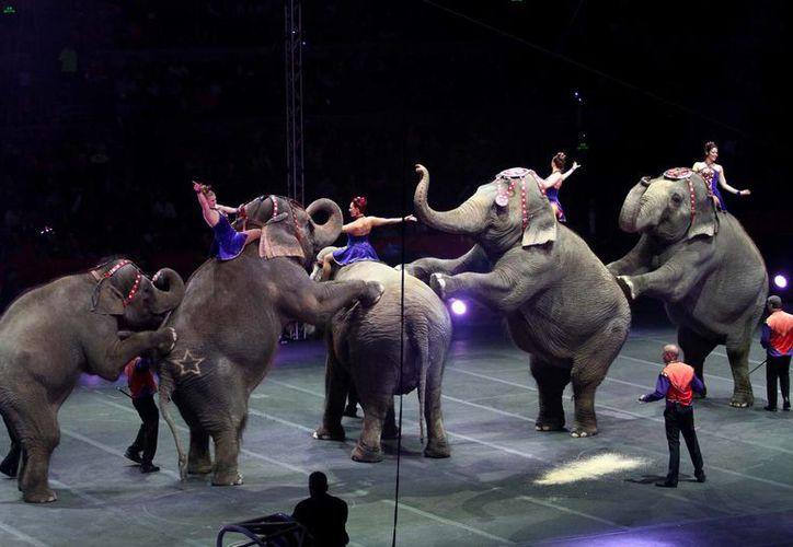 Según los diputados, los animales no cumplen ninguna función educativa en los circos y tampoco hacen maromas por 'voluntad propia'. La imagen es de contexto (Archivo/NTX)