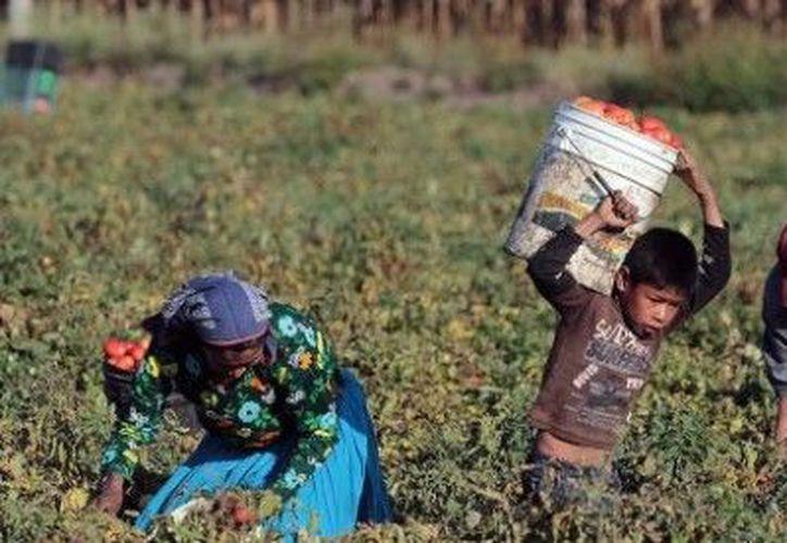 Las actividades productivas de niños, niñas y adolescentes no alivian las condiciones de pobreza de los hogares. (Internet/Contexto)