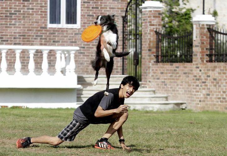 El Frisbee Dog es una disciplina deportiva que ayuda a controlar la energía de los perros. (Francisco Gálvez/SIPSE)