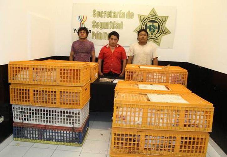Juan Alfredo González Cetina, Domingo Miguel Sulub Ek y Enrique Abraham Cauich Ucán pensaban vender los pollos y pavos para comprar cerveza y 'bombitas'. (SIPSE)