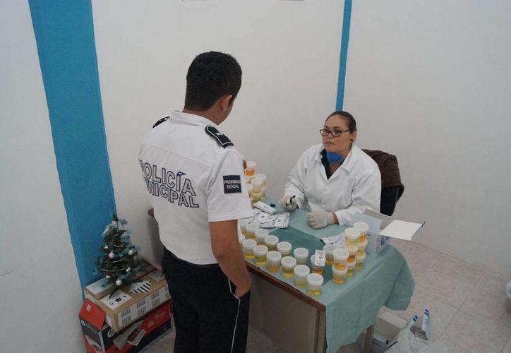 Los elementos policíacos entregaron sus muestras de orina para que sean examinadas. (Redacción/SIPSE)