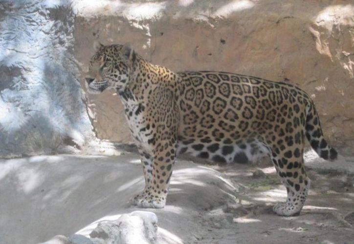 En Guerrero, la Profepa rescató a 266 animales de un zoológico que no pudo comprobar su posesión legal. (Notimex)