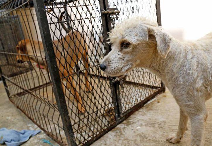 Los animales son atendidos en los refugios. (Jesús Tijerina/SIPSE)
