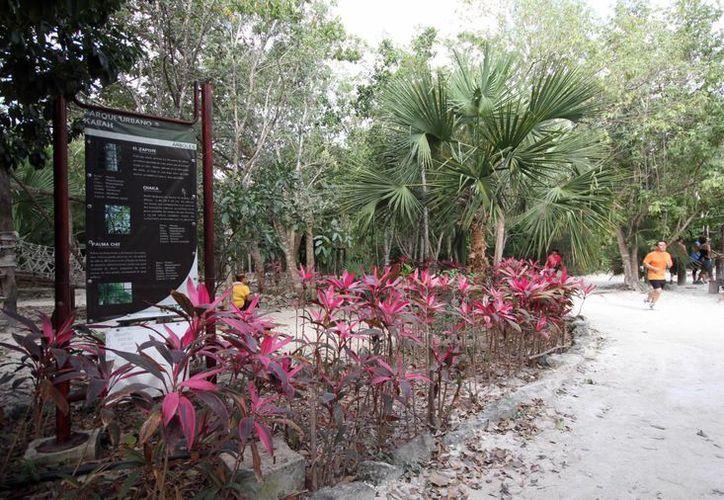 Participan los que se desempeñan en el vivero del Parque Urbano Kabah y del Ombligo Verde. (Israel Leal/SIPSE)
