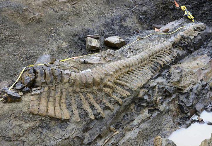 Además de las vértebras se encontraron algunos huesos de la cadera. (Agencias)