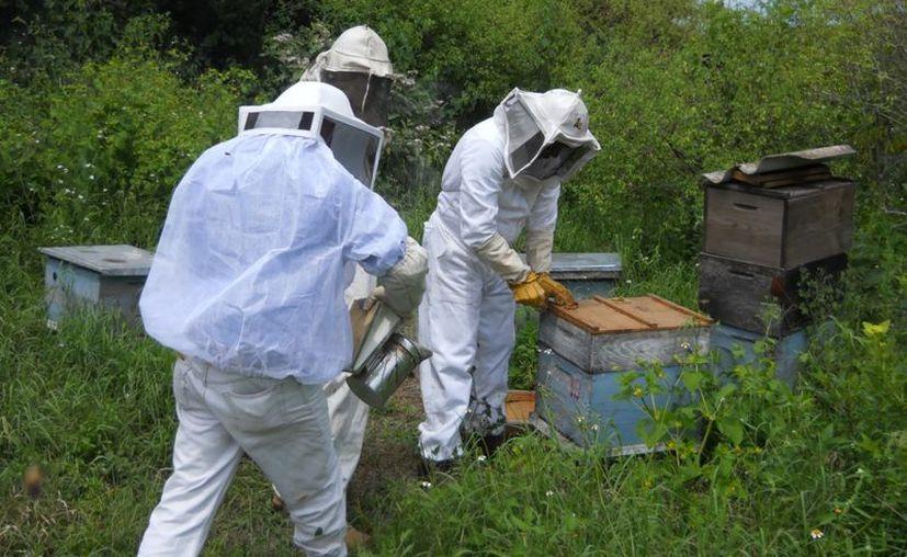 Mencionan que la temporada apícola está por comenzar. (Carlos Castillo/SIPSE)