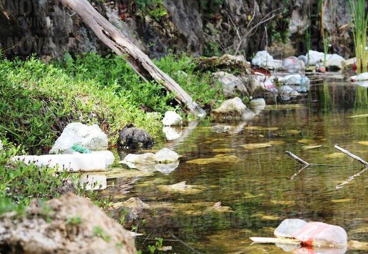 El análisis de calidad de agua del cenote dentro de la invasión In House, se encuentra estancado por falta de recursos. (Archivo/SIPSE).