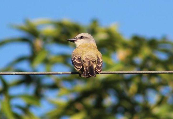 Dos aves se sumaron al abanico de especies  que surcan el cielo de la Isla de las Golondrinas. (Archivo/SIPSE)