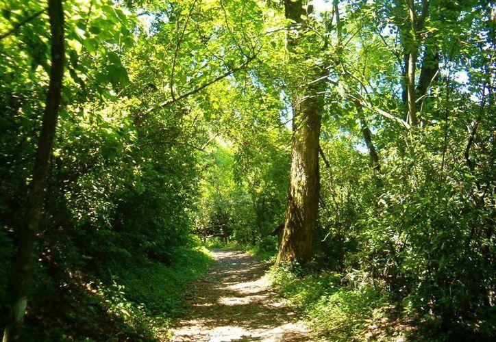 Se establecerán mesas de trabajo para discutir el tema del desarrollo forestales y maderable. (Contexto/Internet)