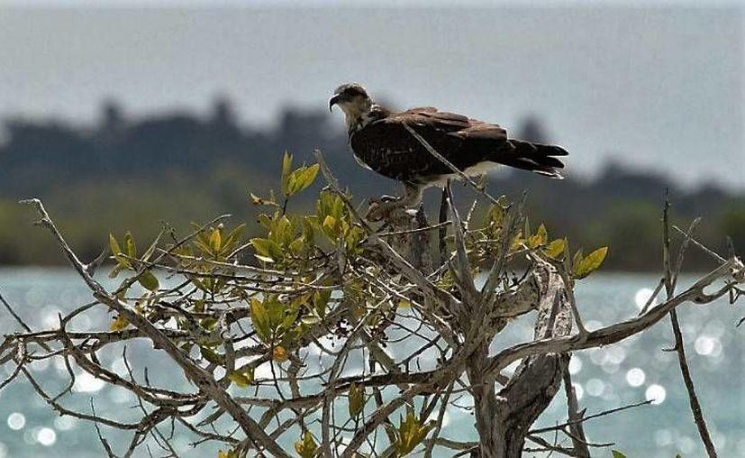 La zona donde se desarrollará el proyecto ecoturístico forma parte de una Unidad de Manejo Ambiental (UMA). (Javier Ortíz/SIPSE)