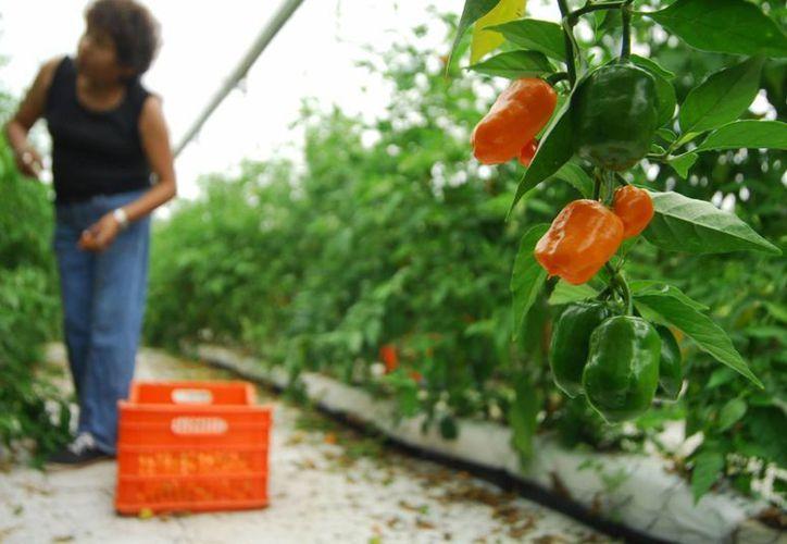 Impulsarán proyectos para fortalecer y mejorar cultivos. (Notimex)