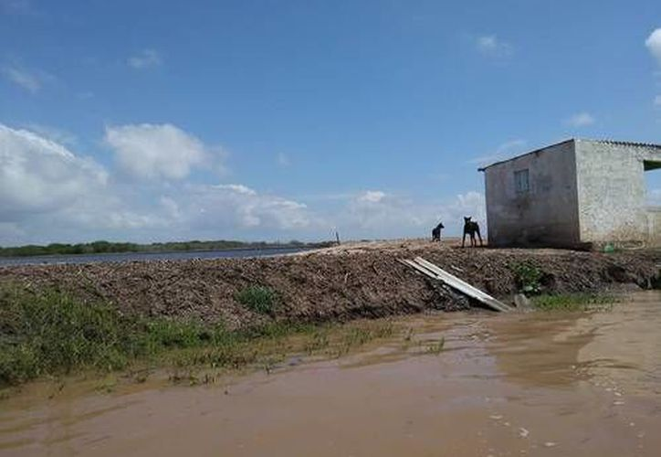 Los denunciantes dijeron que la zona protegida abarca tres mil 500 hectáreas. (La Jornada)