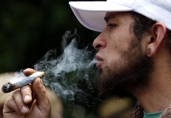 antes de la legalización de la marihuana medicinal, el 11% de los adultos mayores de 21 años reportaron haber consumido marihuana. Imagen de contexto. (Archivo/Agencias)