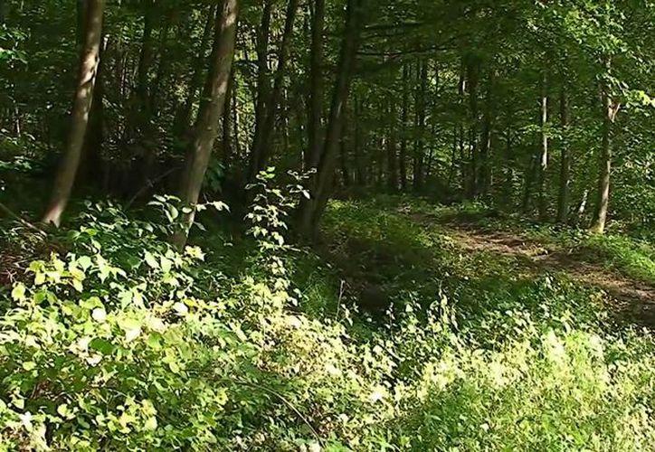Unos agentes acudieron al bosque para llevar a la mujer al hospital. (Contexto/Internet)