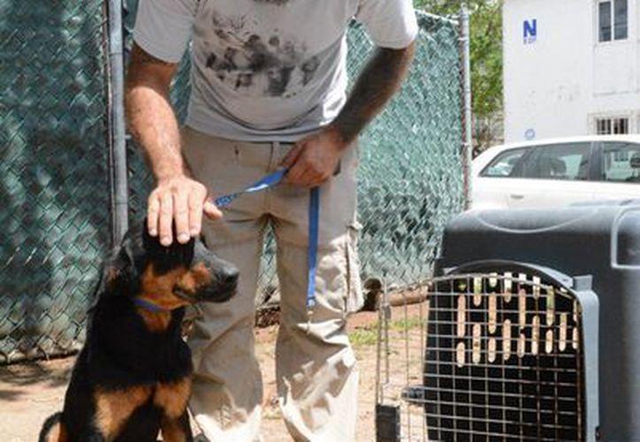 Ricardo Pimentel de la asociación Tierra de Animales rescató a los perros de la casa en la Supermanzana 29. (Victoria González/SIPSE)