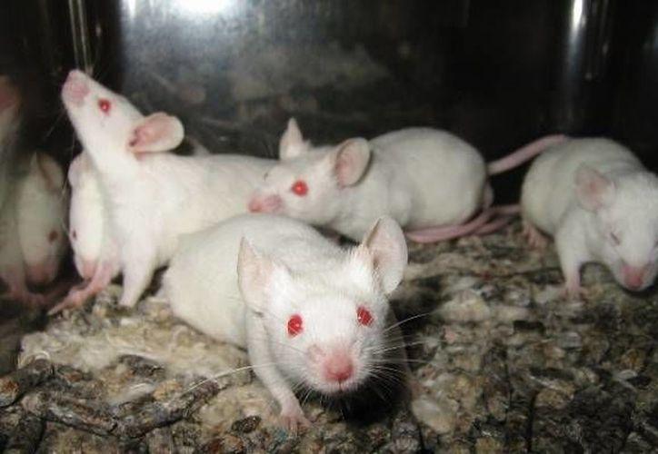 Los resultados de esta investigación fueron publicados en la revista Experimental Eye Research. (imagenpoblana.com)
