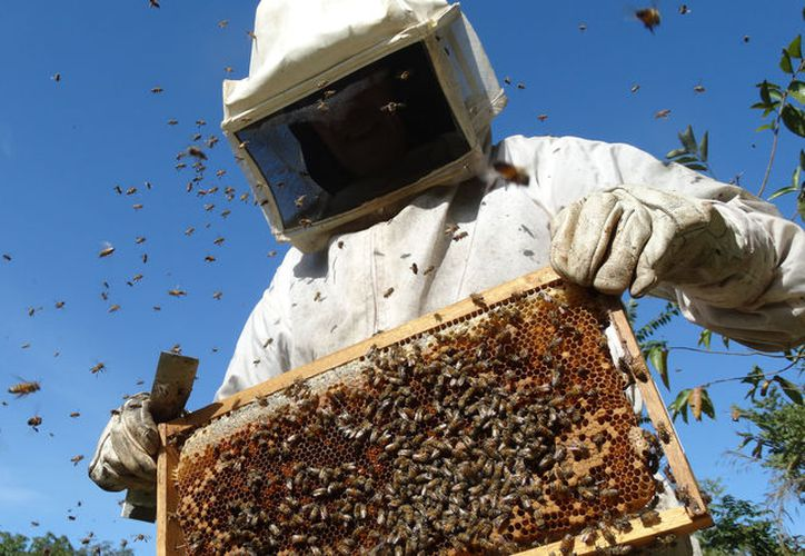 Yucatán perdió en 2017 tres puestos en cuanto a la producción de miel en el país. (Novedades Yucatán)