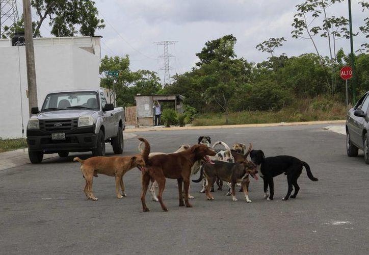 Los perros callejeros de algunos fraccionamientos son alimentados por miembros de la organización Can Cat Love. (Contexto)