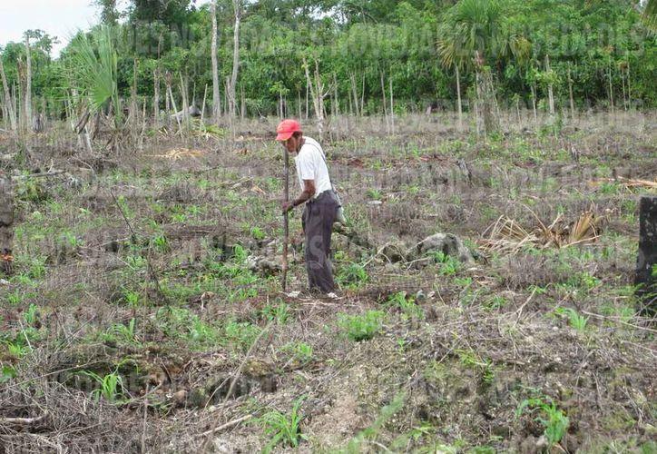 Es de suma importancia los recursos económicos para los hombres del campo. (Joel Zamora/SIPSE)