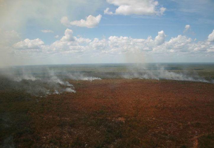 Hasta el momento el incendio más grande ya afectó mil 900 hectáreas. (Adrián Barreto/SIPSE)
