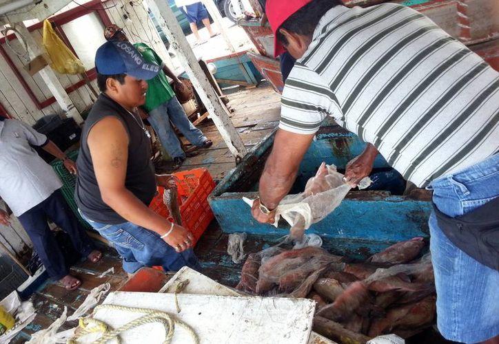 Sólo dos barcos lograron capturar dos toneladas, lo que apenas hizo redituable la pesca. (SIPSE)