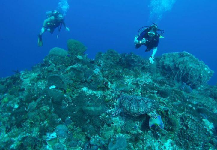 Protegerán las especies marinas en unidades arrecifales. (Luis Soto/SIPSE)