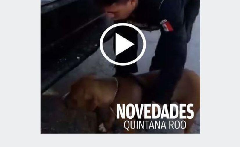 La mascota era trasladada sobre la batea de la patrulla 7164. (Adrián Puc/SIPSE)